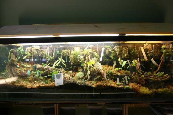 I Learned A New Word Paludarium Lol The Planted Tank Forum